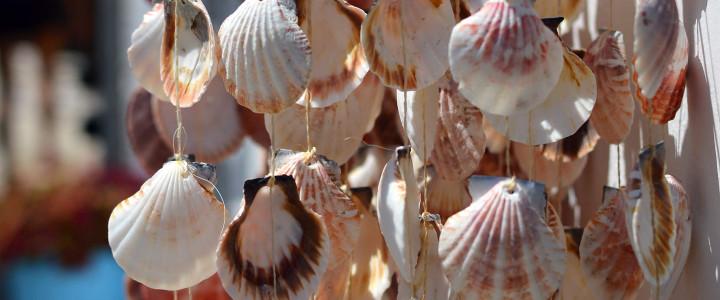 Sea shells1