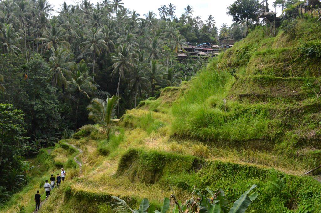 Bali Ricefields Taganan