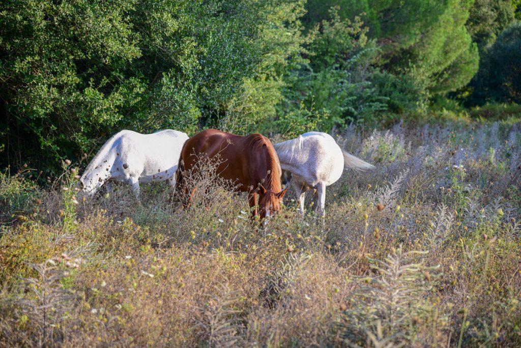 horse riding Katigiorgis