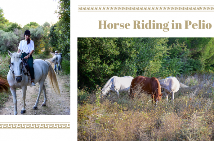 horse riding cover